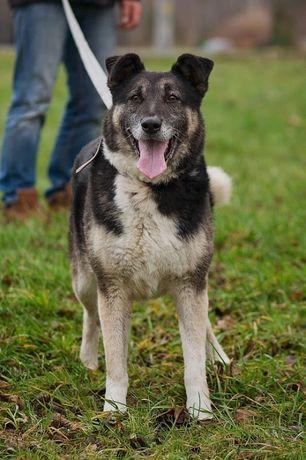 Łapuś - aktywny, pełen radości psiak szuka domu