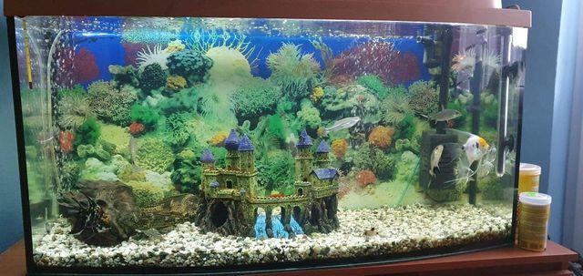 Akwarium z pokrywą 200l