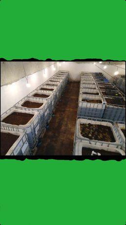 Húmus de Minhocas Californianas (Adubo Orgânico Natural)