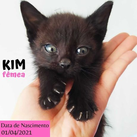 Gatinha 4 meses para adoção (Kim)