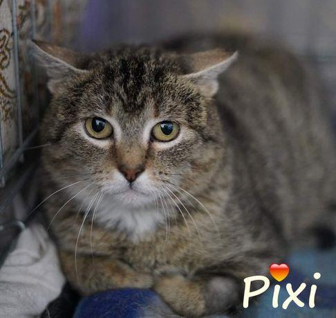 Pixi poleca się do adopcji