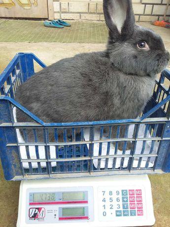 Продам кроликов разных пород