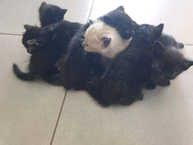 Gatos para adotar