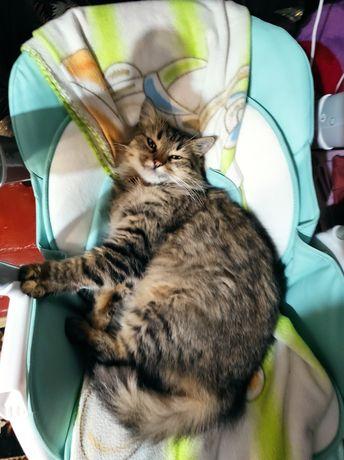 Віддам кішку в добрі руки. Кошка в частный дом.