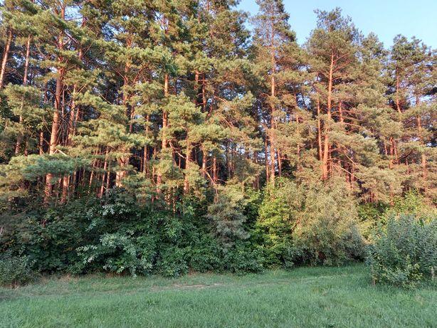 Земельна ділянка, ліс
