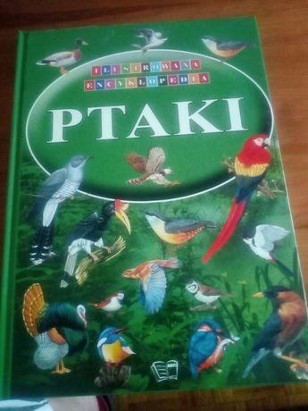 Książka Ptaki ilustrowana encyklopedia