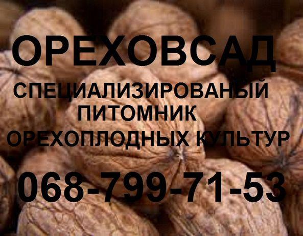Саженцы грецкого ореха высокоурожайных сортов.