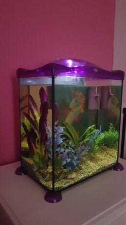 Aquário com iluminação LED