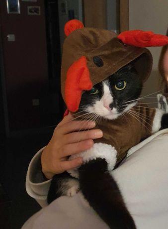 Renifer - kostium dla małego psa lub kota