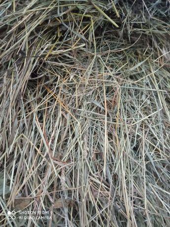 Продам полевое сено !!!