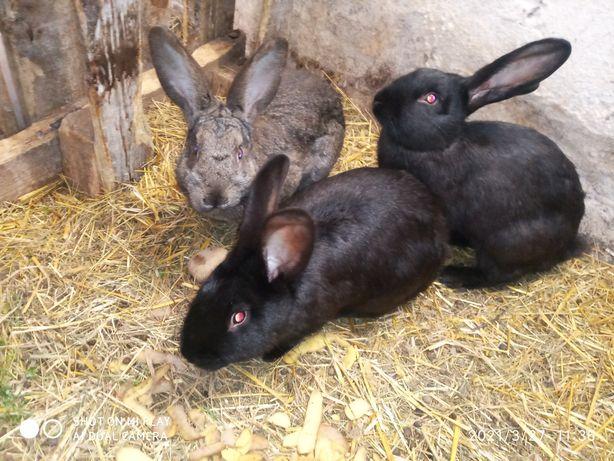 Кролики зайці на продаж
