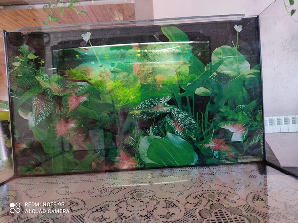 Akwarium 65litr likwidacja + roślinki żywe z przycinki