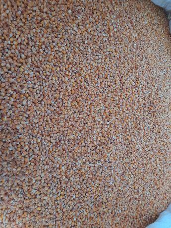 Kukurydza sucha ( czyszczona mielona do gołębi flint )