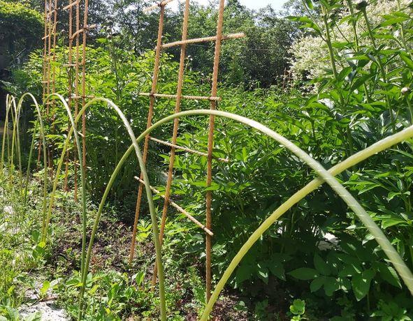 Опоры для растений. Кустодержатели. Арматура композитная стеклопластик