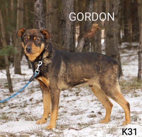 GORDON poleca się do adopcji