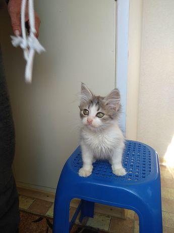 Котёнок в добрые руки 1 месяц мальчик