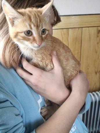 Котик 4місяці, без паразитів. Віддаємо в добрі руки.привеземо по Львов