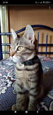 Кошка котенок пятимесячный приучена к лотку живет в квартире