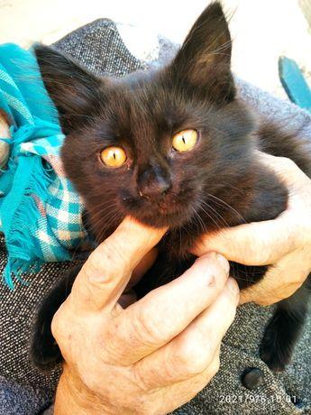 Котик котенок черный бесплатно