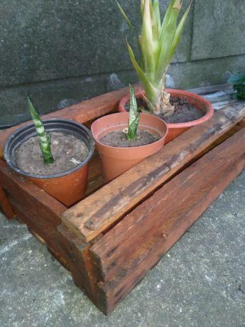 Ящик деревянный декор антиквариат ссср
