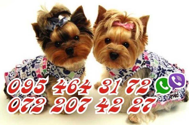 Стрижка  собак и кошек в Луганске и обл.