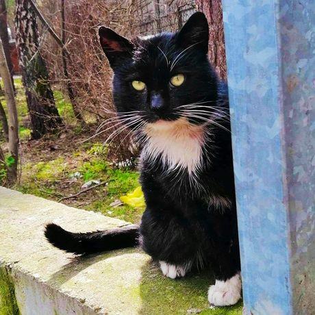 Czarno-biały kotek szuka domu
