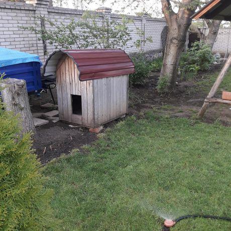 Буда  домик для Собаки