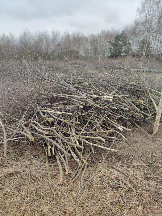 Oddam gałęzie i drzewka po wycince Janczewo - image 1