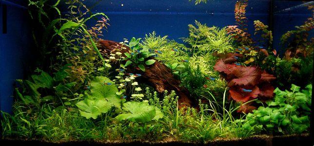 Чистка, изготовление и обслуживание аквариумов и терариумов