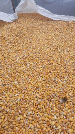 Кукурудза пшениця с доставка ячмінь зерноотход кукуруза овес