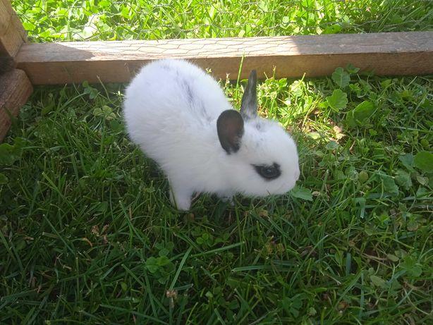 Mini króliczki śliczne