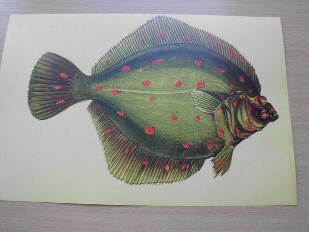 Zwierzęta - Woda reprint XIX w. grafik