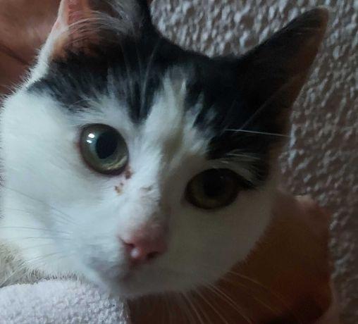 Młodziutka ok. 8 m-czna śliczna miła kotka pilnie do oddania