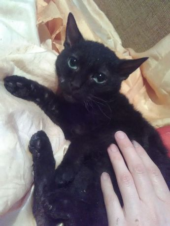 Отдам даром котёнка 5 месяцев