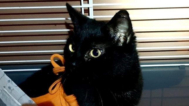 młodziutka koteczka Beatka