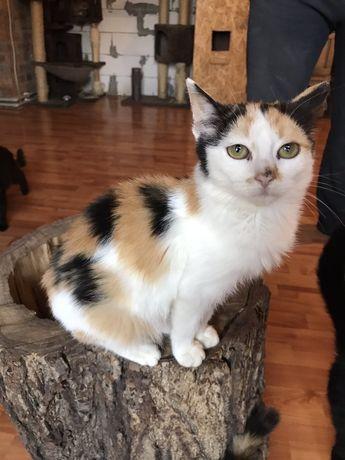 Красивые и ласковые кошечки-котята ищут дом!