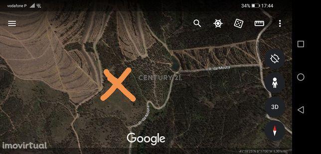 Terreno de matas/pinhais de quinta agrícola de Lousada. São 4 pinhais