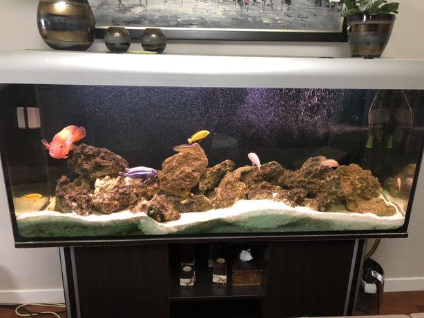 Akwarium 450l z obsadą pyszczaki, pielęgnice z szafką