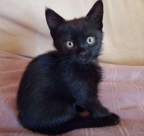 Черный котенок в добрые руки