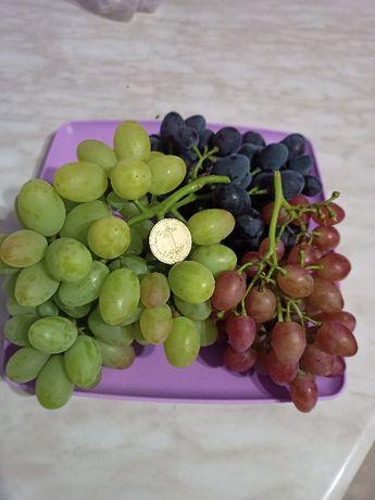 саженцы винограда(8 сортов), тархун