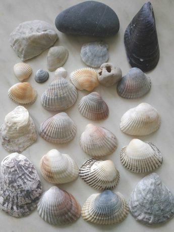 Ракушки океанические, морские