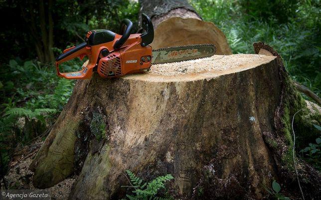 Wycinka drzew , przycinanie, prace ogrodowe