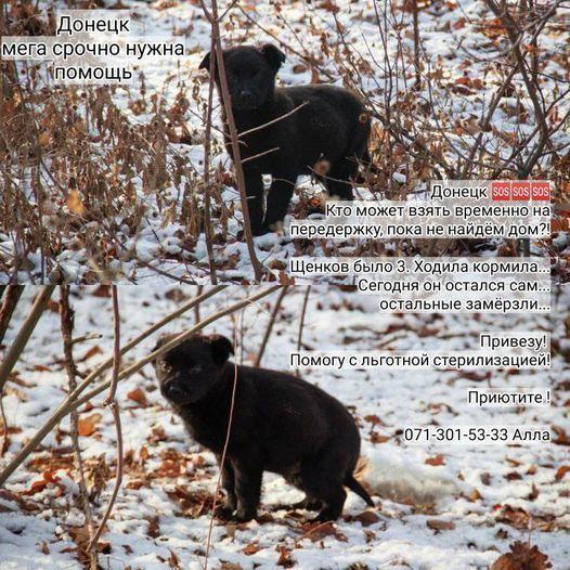 Щенок ищет дом или передержку на время Донецк - изображение 1