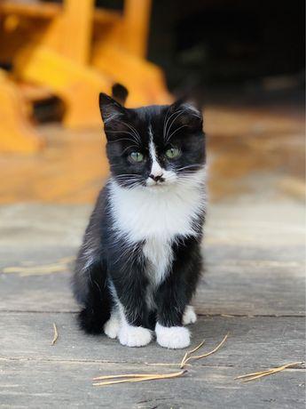 Котята пушистики в заботливые руки