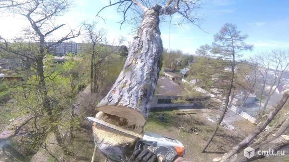 Обрезка ,спиливание деревьев Одесса доросовестно,аккуратно