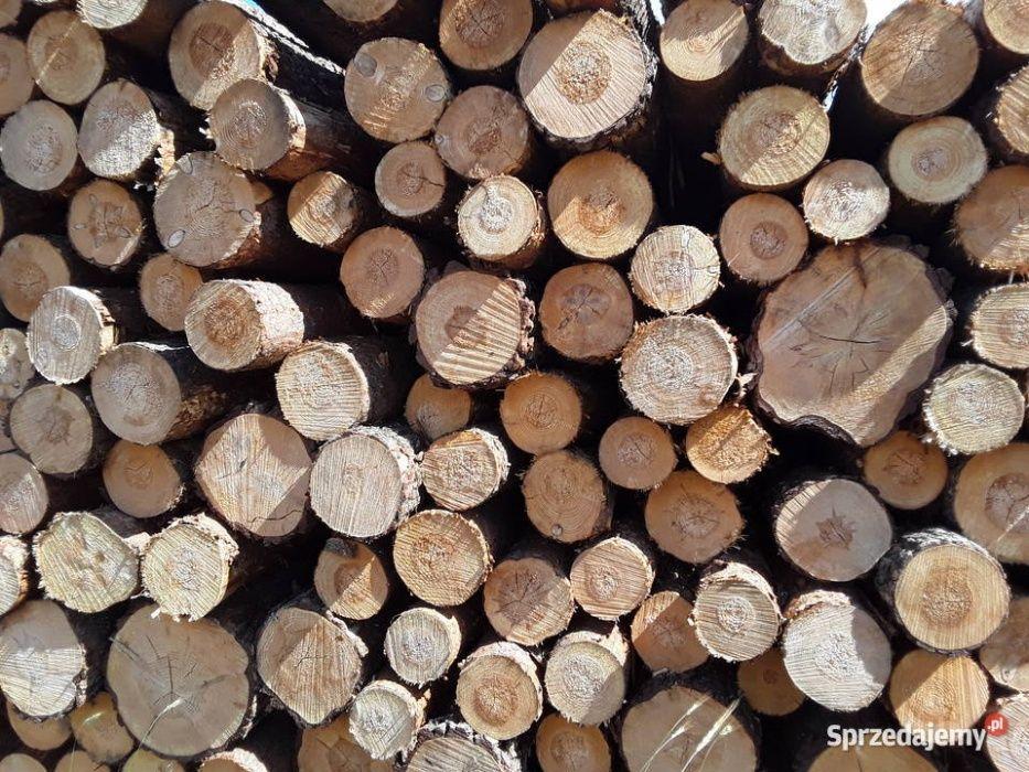 drzewo mieszane 70 zl 1 metr Kobylanka - image 1