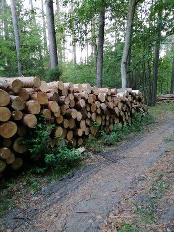 Drewno papierówka sosnowa