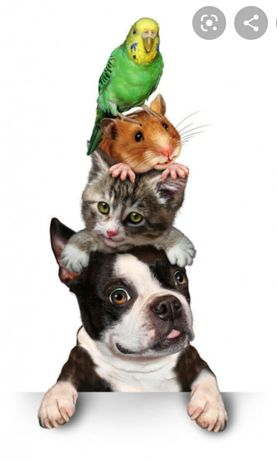 Передержка животных