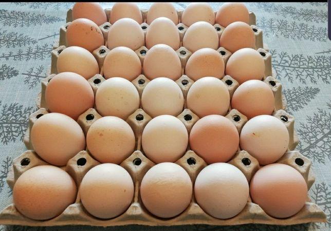 Jajka wiejskie z wiejskiego chowu zdrowe i świeże nie ma jak sprawdzon