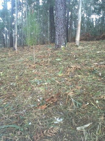 Limpezas Agro-Florestais